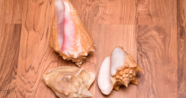 Conch Meat